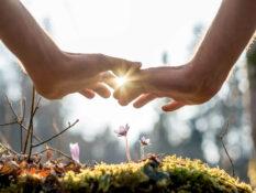 Zwei Hände beschützen eine kleine Blume im Wald.